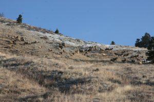 Teton Elks