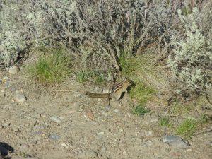 wildlife 021
