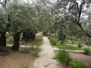 Modern Day Garden of Gethsemani