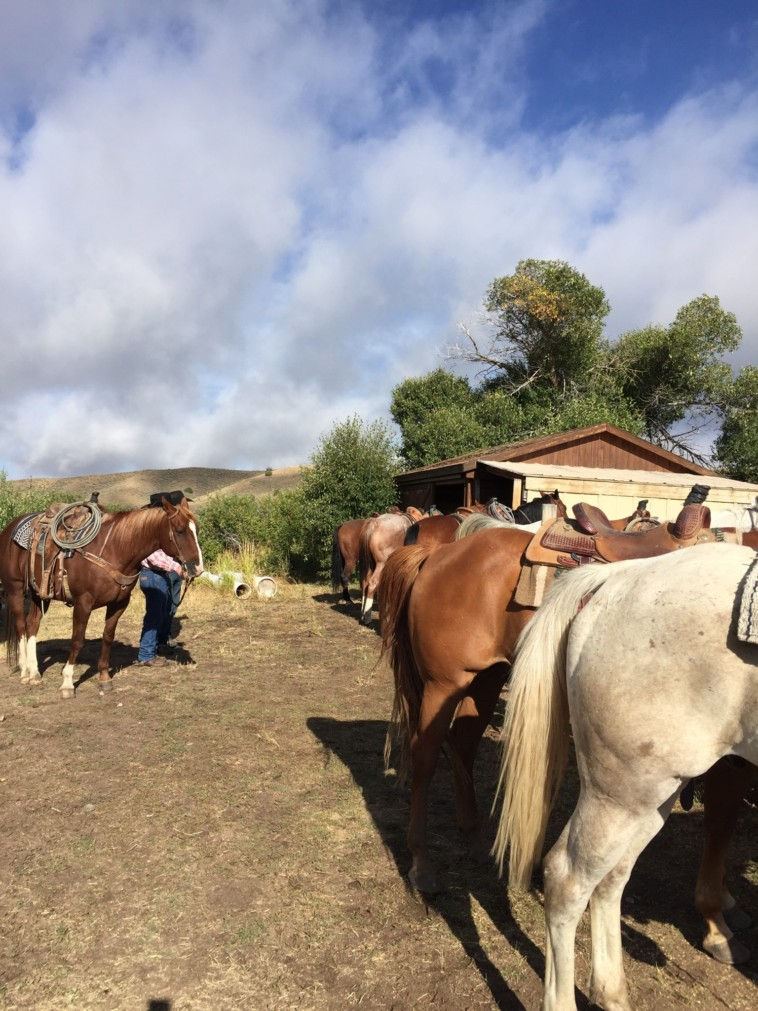Saddled Horses ready for work